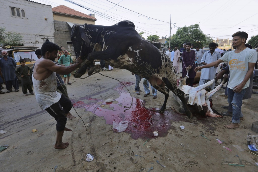 People struggle to control a bull for slaughtering on the occasion of the Eid al-Adha holidays, in Karachi, Pakistan, Saturday, Aug. 1, 2020. (AP Phot...