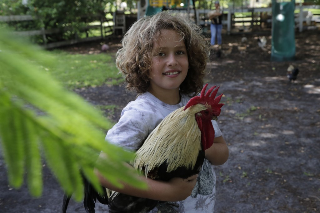 Liam Hunter holds a rooster at the Family Horse Academy where his mother Timea Hunter is hoping to organize education for a group of children during t...