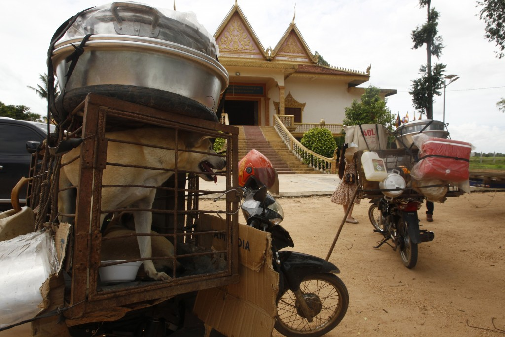 Dogs place in a cage are carrying at a back seat of motorbike as they supposed to be sold to slaughterhouses in a Buddhist pagoda in Tang Krasang vill...