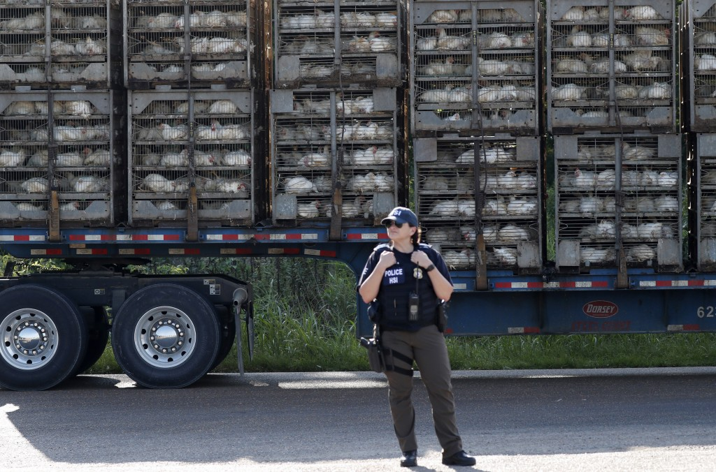 FILE - In this this Aug. 7, 2019 file photo, a trailer loaded with chickens passes a federal agent outside a Koch Foods Inc., plant in Morton, Miss., ...