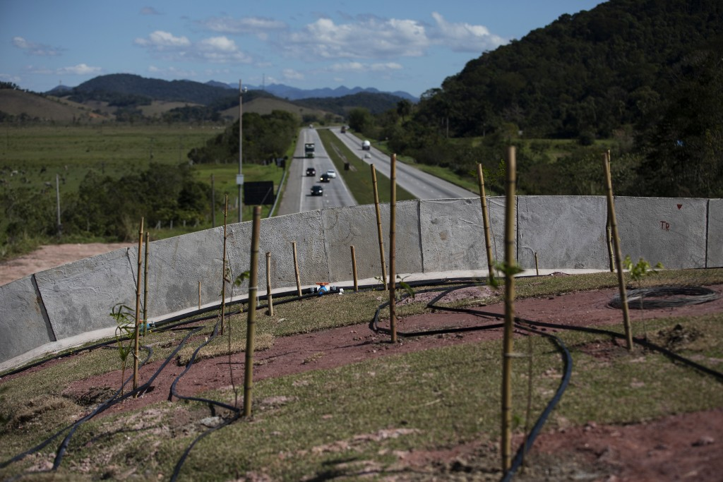 Saplings grow on an eco-corridor for the endangered Golden Lion Tamarin that crosses over an interstate highway in Silva Jardim, Rio de Janeiro state,...