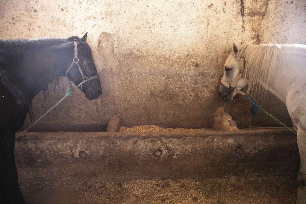 Horses that are used to drive tourists around in carriages rest in a stables in Marrakech, Morocco, Wednesday, July 22, 2020. Morocco's restrictions t...
