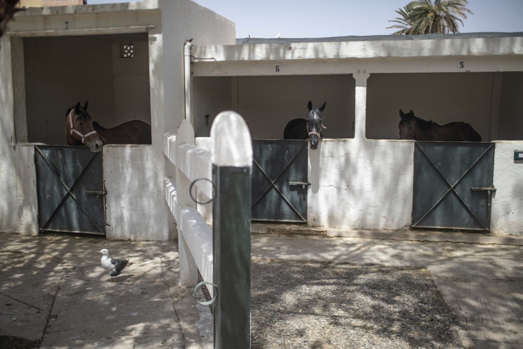 Horses in their stables at the SPANA shelter in Marrakech, Morocco, Wednesday, July 22, 2020. Morocco's restrictions to counter the coronavirus pandem...