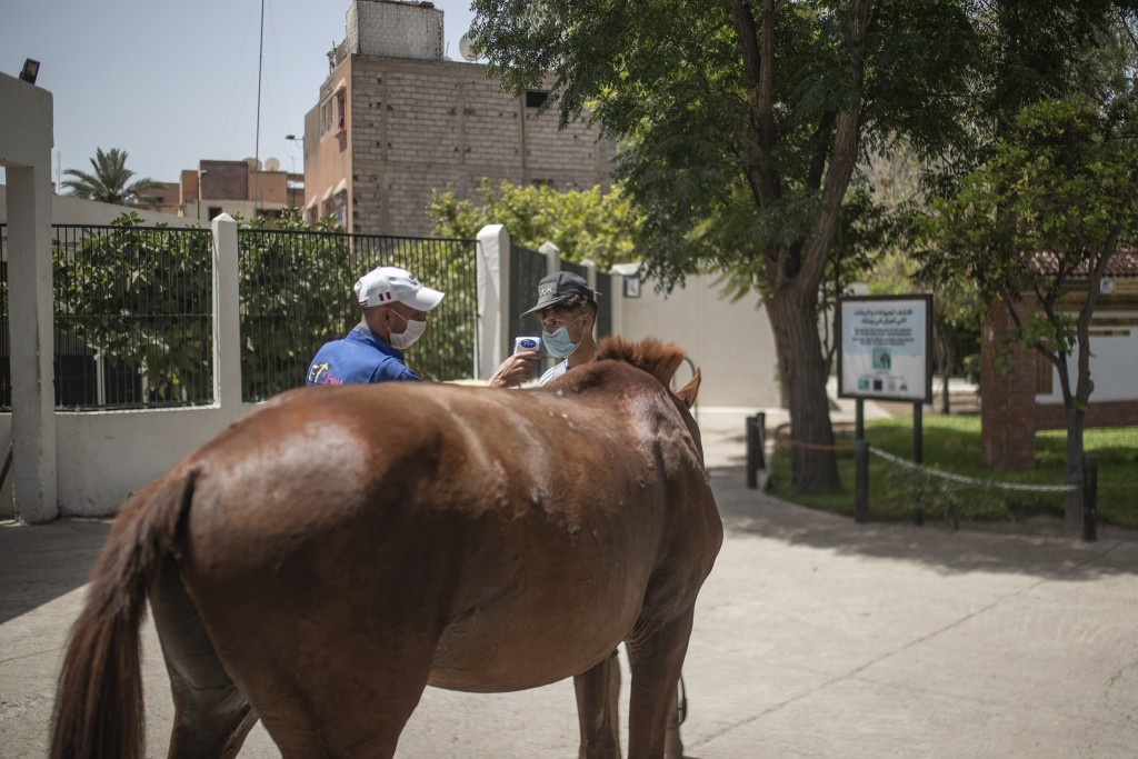 A horse owner has his temperature taken at the headquarters of SPANA shelter for animals, in Marrakech, Morocco, Wednesday, July 22, 2020. Morocco's r...