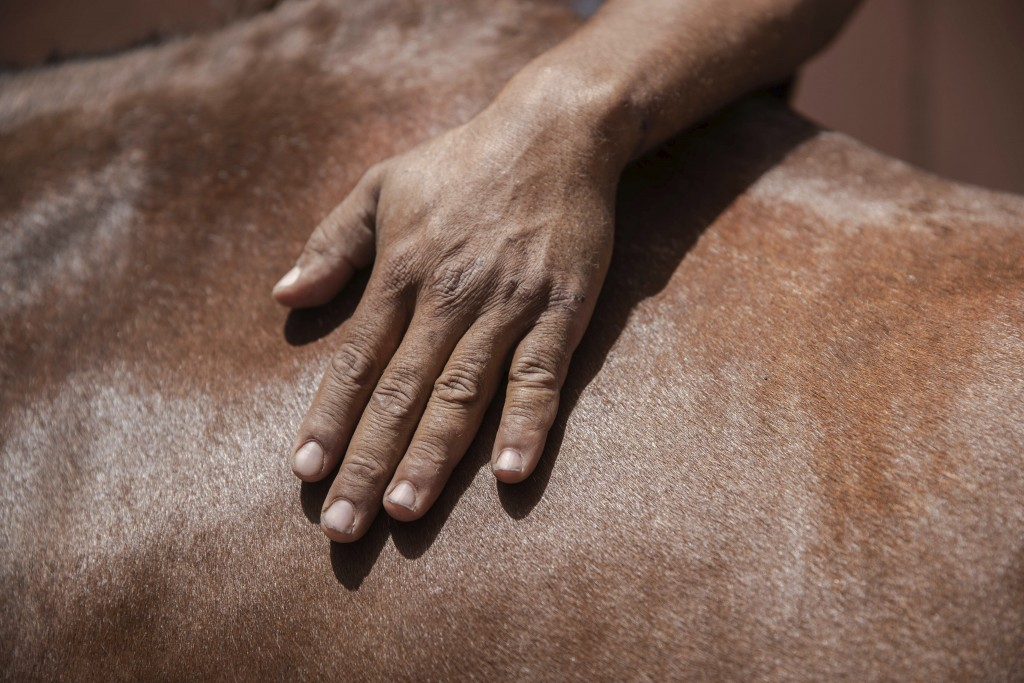 A man pets his horse while it feeds near a fountain in Marrakech, Morocco, Wednesday, July 22, 2020. Morocco's restrictions to counter the coronavirus...