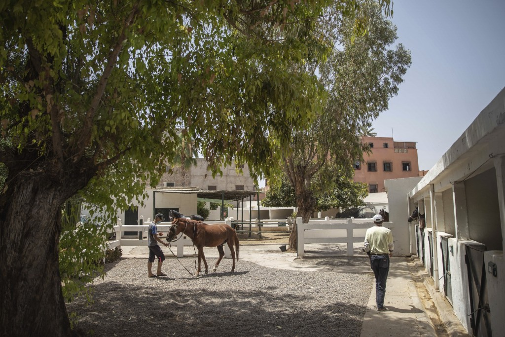 A man holds his sick horse at the SPANA animal shelter in Marrakech, Morocco, Wednesday, July 22, 2020. Morocco's restrictions to counter the coronavi...