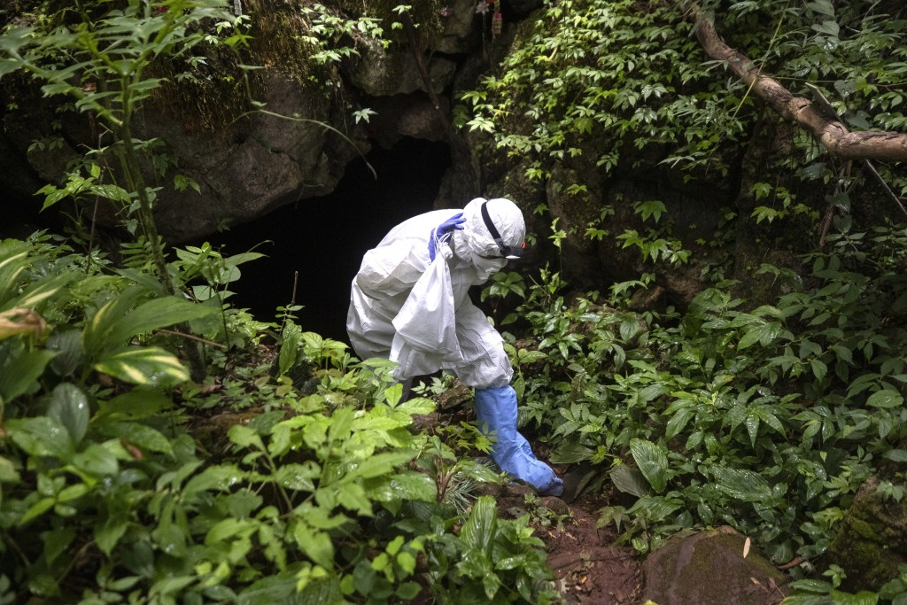 A researcher with a bat in a bag walk out from a cave inside Sai Yok National Park in Kanchanaburi province, west of Bangkok, Thailand, Saturday, Aug....