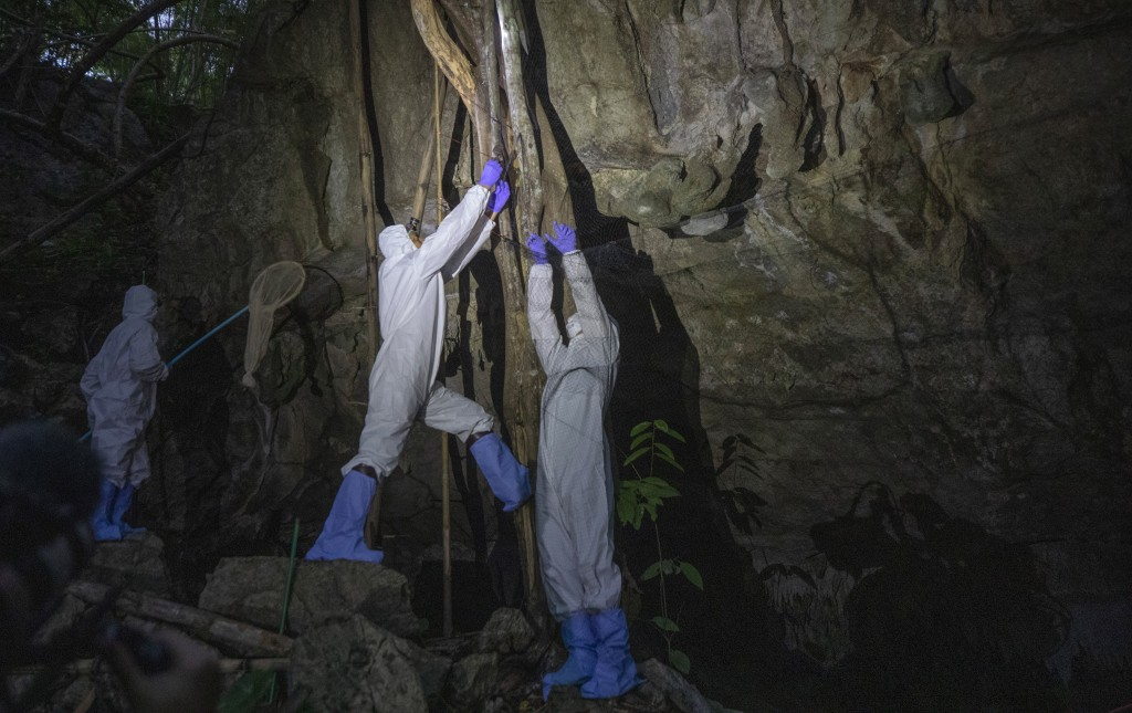 Researchers catch bats in front of a cave inside Sai Yok National Park in Kanchanaburi province, west of Bangkok, Thailand, Friday, July 31, 2020. Res...