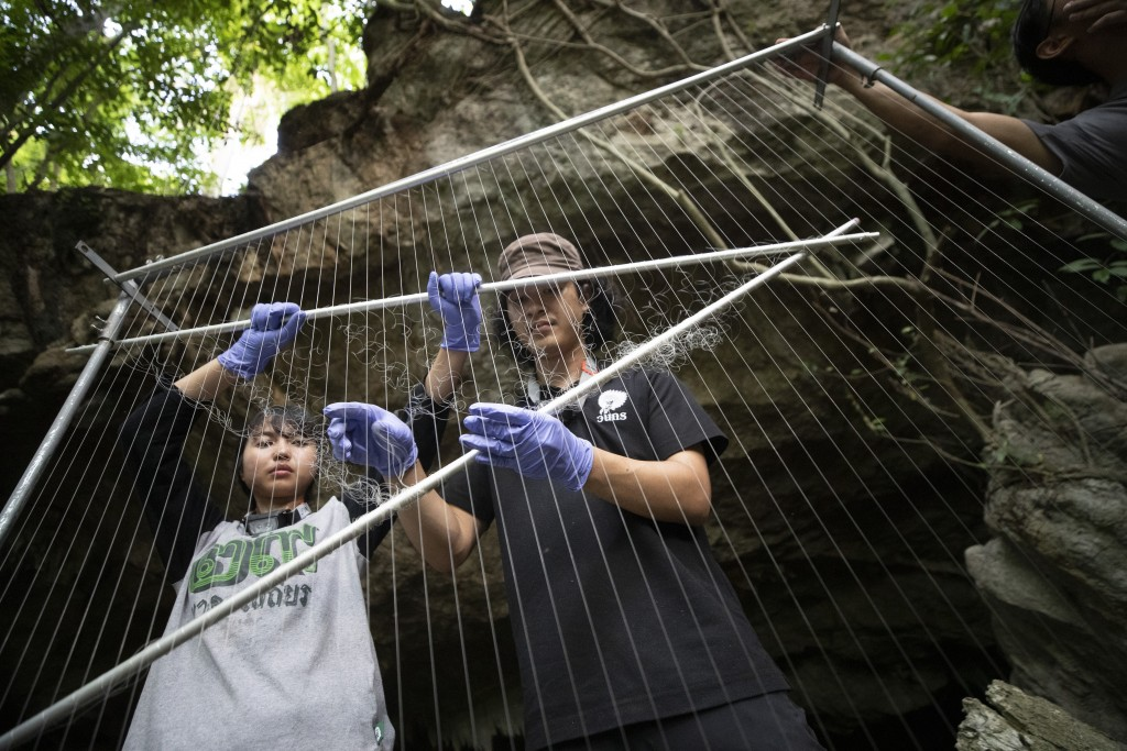 Researchers set up equipment for catch bat in front of cave inside Sai Yok National Park in Kanchanaburi province, west of Bangkok, Thailand, Friday, ...