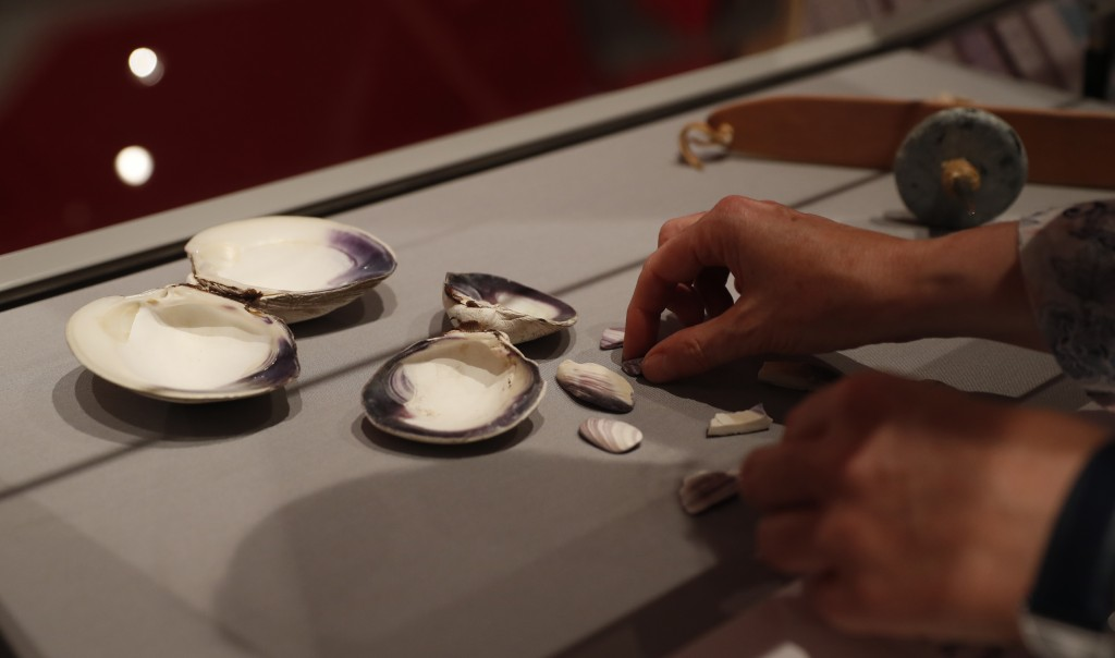 Co-curator Jo Loosemore adjusts a display of the white and purple shells of whelks and quahog, the type of shells that went into the making of a wampu...
