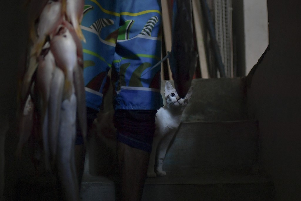 Bianca the cat eyes a string of fish caught by Eric Mendez, a 40-year-old bricklayer by trade, that he caught in the open sea on his inner tube armed ...