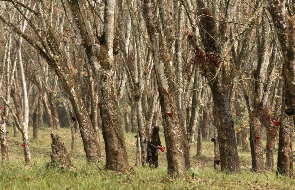 FILE - In this Jan. 22, 2007 file photo, an unidentified worker inspects collected latex at the Firestone rubber plantation near Monrovia, Liberia. In...
