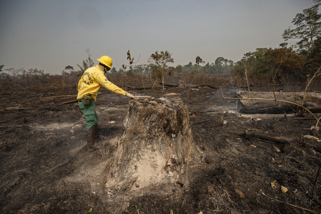 An agent from the IBAMA state-run environment agency inspects an area consumed by fire near Novo Progresso, Para state, Brazil, Tuesday, Aug. 18, 2020...