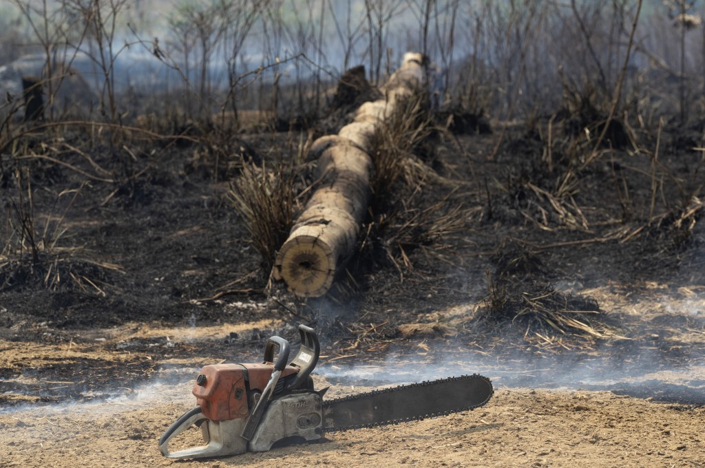 A rancher's chainsaw sits idle next to a felled tree in an area consumed by fire near Novo Progresso, Para state, Brazil, Tuesday, Aug. 18, 2020. A ma...