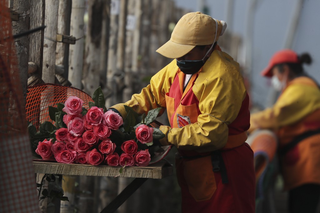 Women prepare flowers for export at one of the warehouses of Quito Inor Flowers, a producer in Lasso, Ecuador, Tuesday, Aug. 25, 2020. Ecuador is the ...