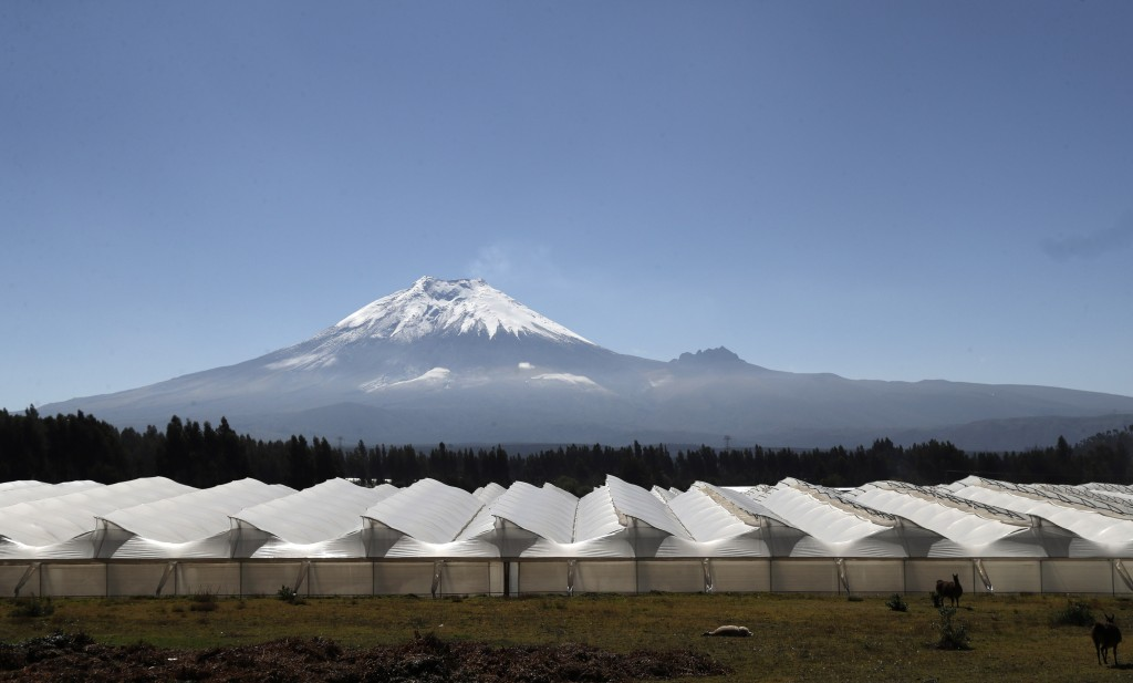 Flower producers Quito Inor Flowers' greenhouses are seen backdropped by the Cotopaxi volcano in Lasso, Ecuador, Tuesday, Aug. 25, 2020. Demand for Ec...