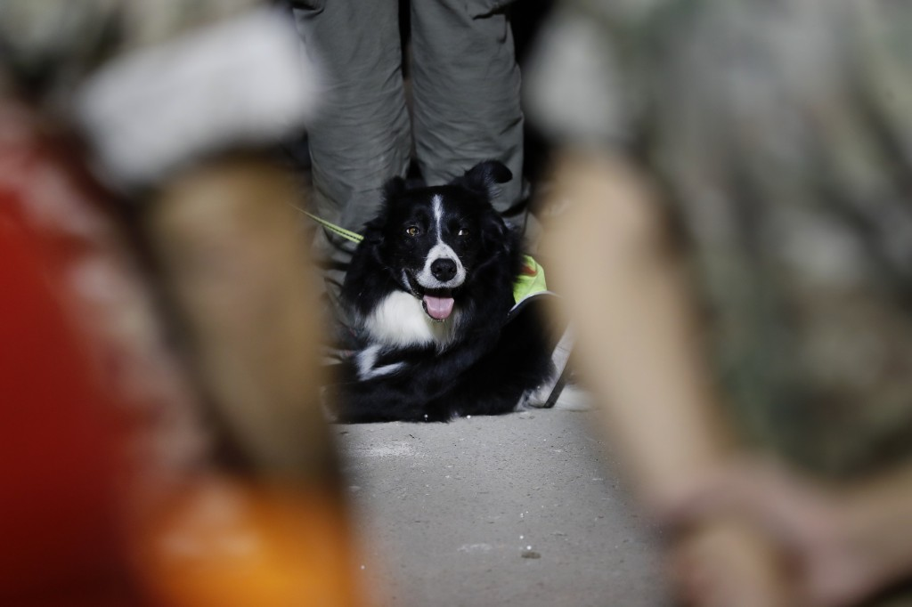 A Chilean rescue dog sits near the site of a collapsed building after getting signals there may be a survivor under the rubble, early Friday, Sept. 4,...