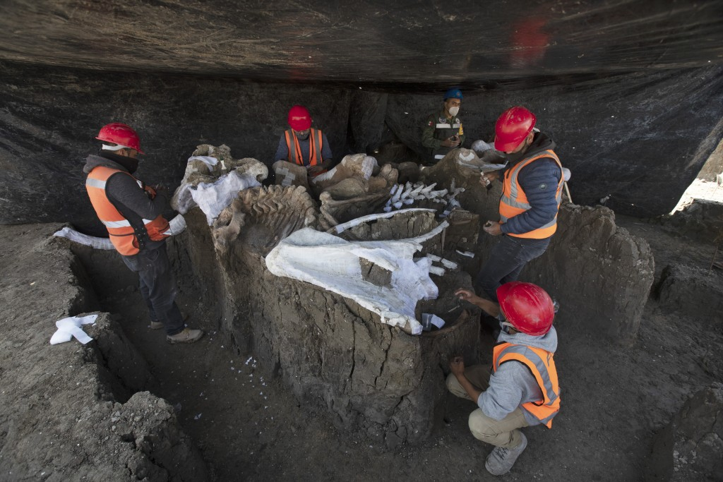 Paleontologists work to preserve the skeleton of a mammoth that was discovered at the construction site of Mexico City's new airport in the Santa Luci...