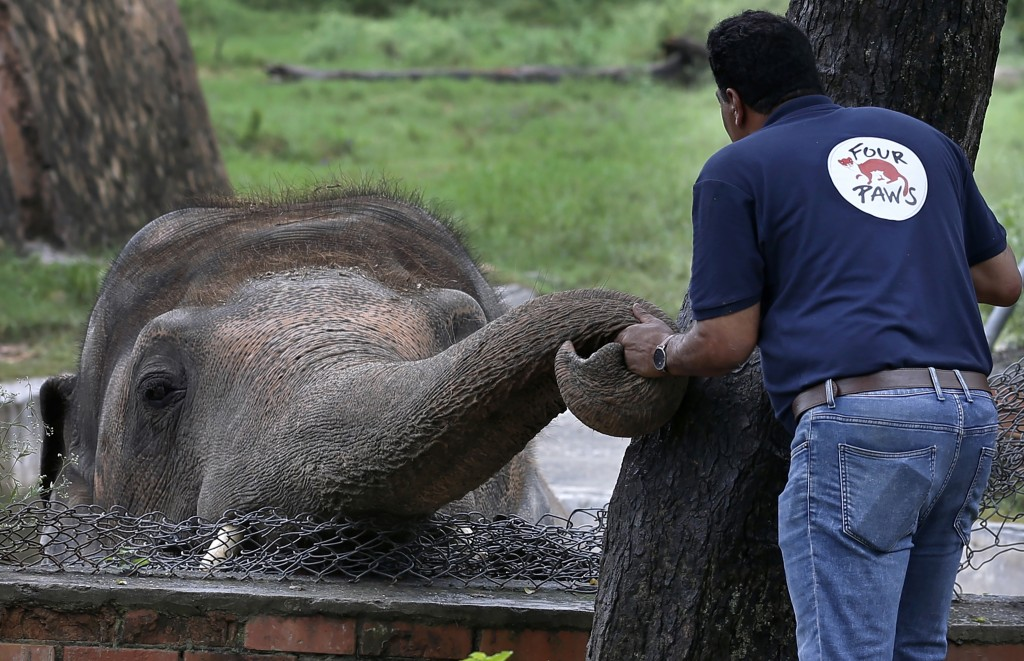 A veterinary from the international animal welfare organization 'Four Paws' offers comfort to an elephant named 'Kaavan' prior to his examination at t...