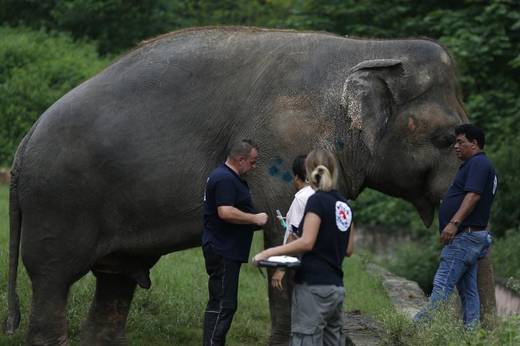 Veterinarians from the international animal welfare organization 'Four Paws' examine an elephant named 'Kaavan' at Maragzar Zoo in Islamabad, Pakistan...