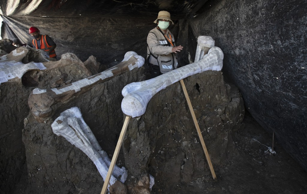Ruben Manzanilla Lopez of the National Anthropology Institute and responsible for the preservation work in the area shows the skeleton of a mammoth th...