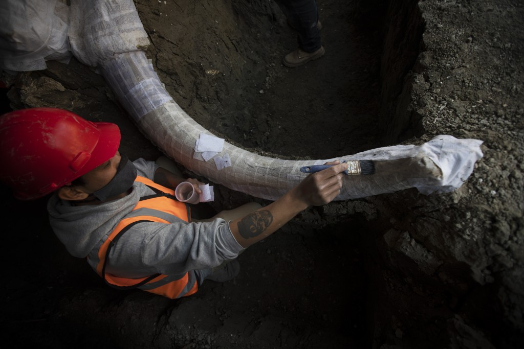 A paleontologist works to preserve the skeleton of a mammoth that was discovered at the construction site of Mexico City's new airport in the Santa Lu...