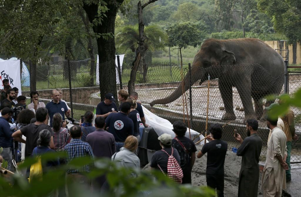 A team of veterinarians from the international animal welfare organization 'Four Paws' briefs  media prior to examining an elephant 'Kaavan' at Maragz...