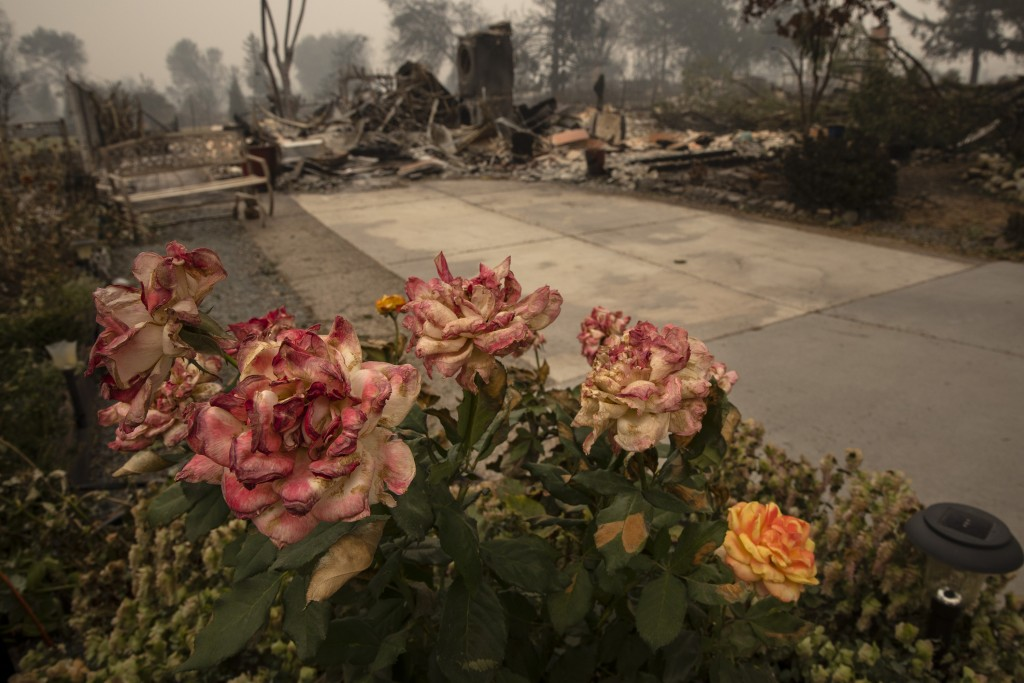 Burnt roses are seen outside a destroyed home as destructive wildfires devastate the region on Friday, Sept. 11, 2020, in Talent, Ore. (AP Photo/Paula...
