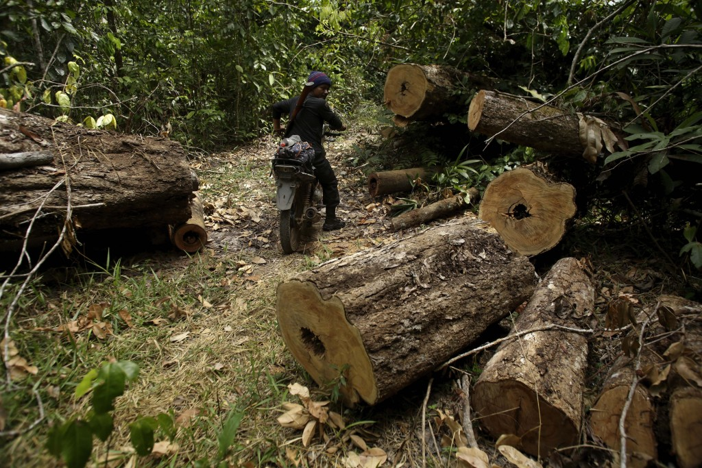 Tenetehara Indigenous man Nemai Tembe from the Ka'Azar, or Forest Owners, rides through an area of trees felled by illegal loggers, as the group patro...