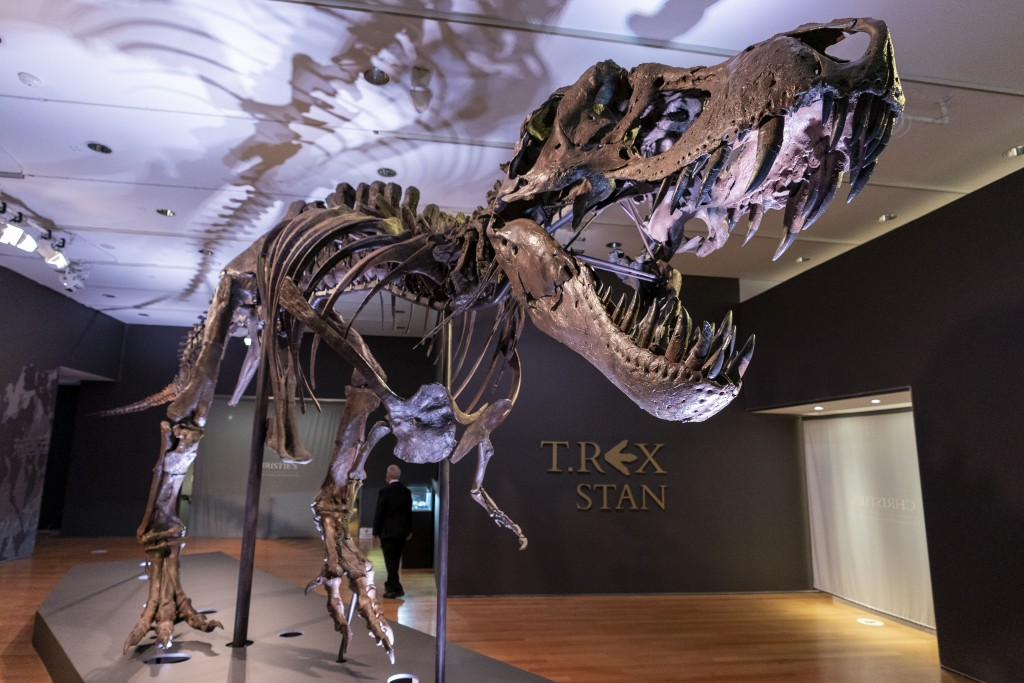 Stan, one of the largest and most complete Tyrannosaurus rex fossil discovered, is on display, Tuesday, Sept. 15, 2020, at Christie's in New York. The...