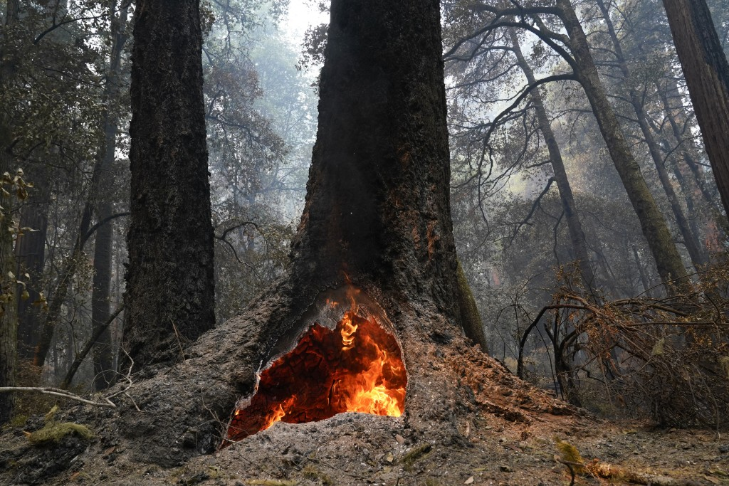 FILE - In this Aug. 24, 2020, file photo, fire burns in the hollow of an old-growth redwood tree in Big Basin Redwoods State Park, Calif. The CZU Ligh...
