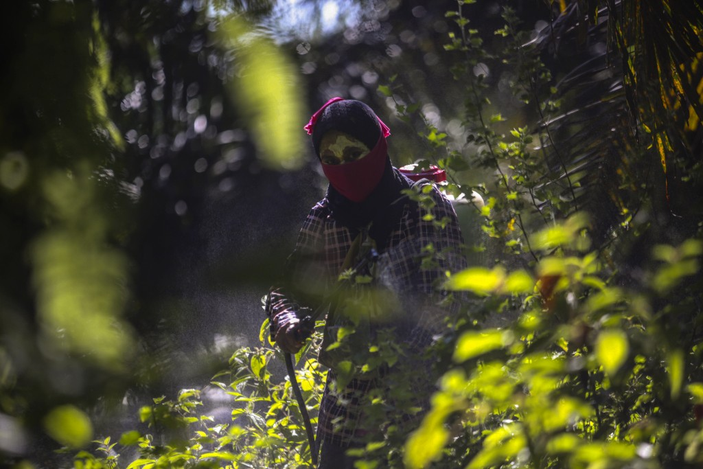 A woman sprays pesticide at a palm oil plantation in Sumatra, Indonesia, Sept. 8, 2018. Workers often cannot get medical care or access to clean water...