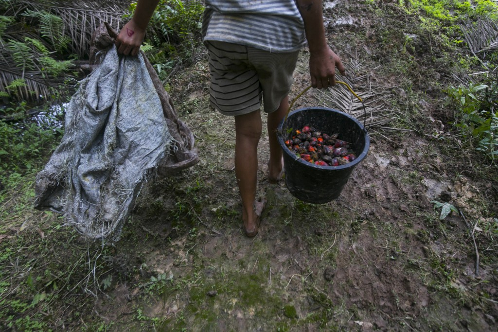 A little girl carries a bucket of palm oil fruit she collected on a plantation in Sumatra, Indonesia, Nov. 13, 2017. Workers who fail to meet impossib...