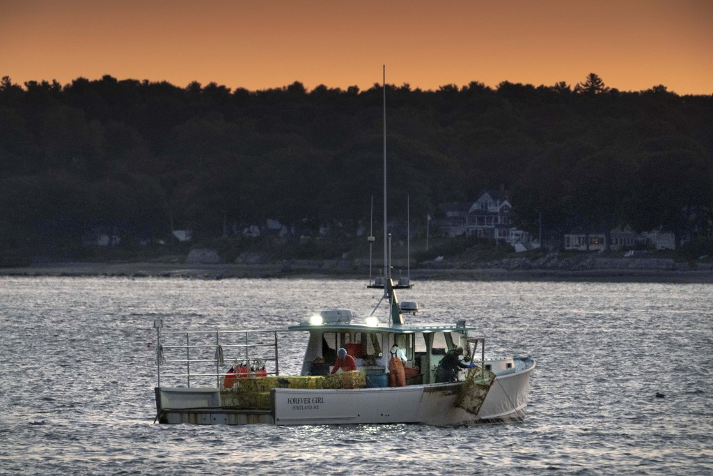 The crew on a lobster boat hauls traps at sunrise, Monday, Sept. 21, 2020, off Portland, Maine. The state's lobster fishermen braced for a difficult s...