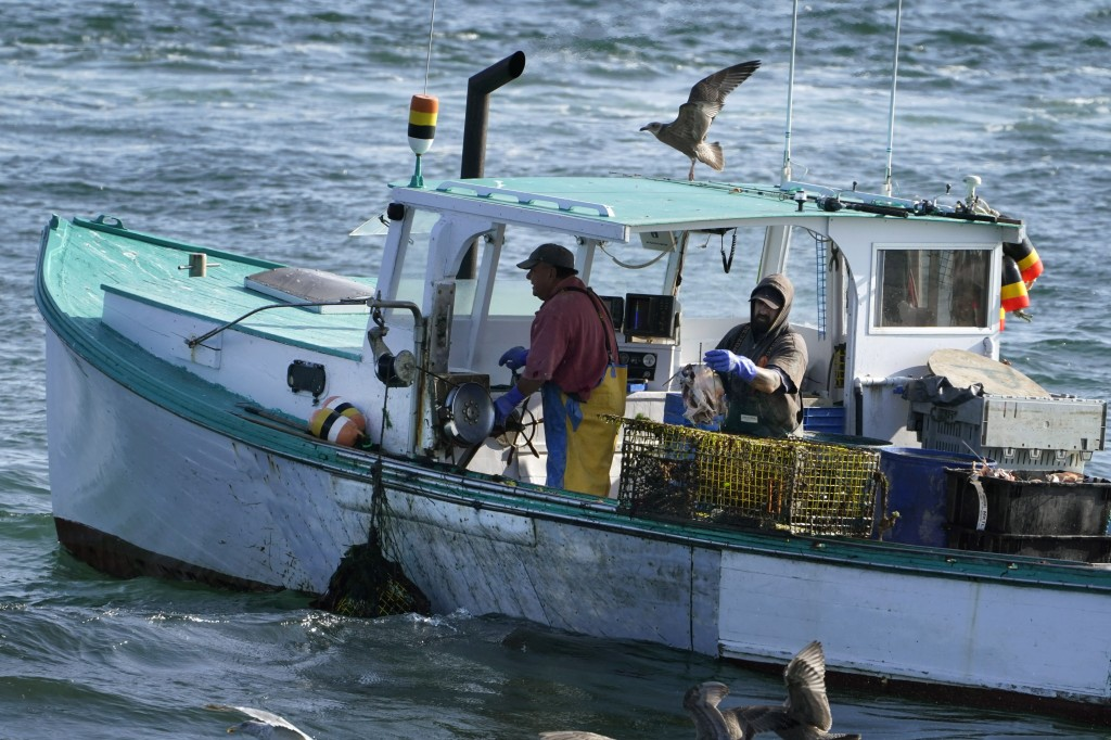A sternman, right, baits a lobster trap while the captain maneuvers the boat while fishing, Monday, Sept. 21, 2020, off South Portland, Maine. Prices ...