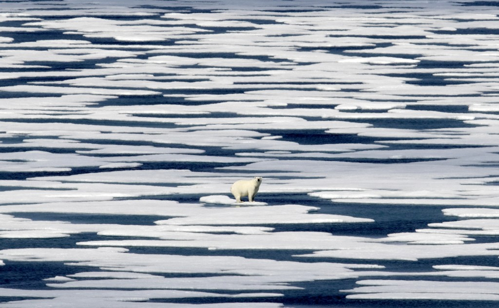 FILE - In this Saturday, July 22, 2017, file photo, a polar bear stands on the ice in the Franklin Strait in the Canadian Arctic Archipelago. In a yea...