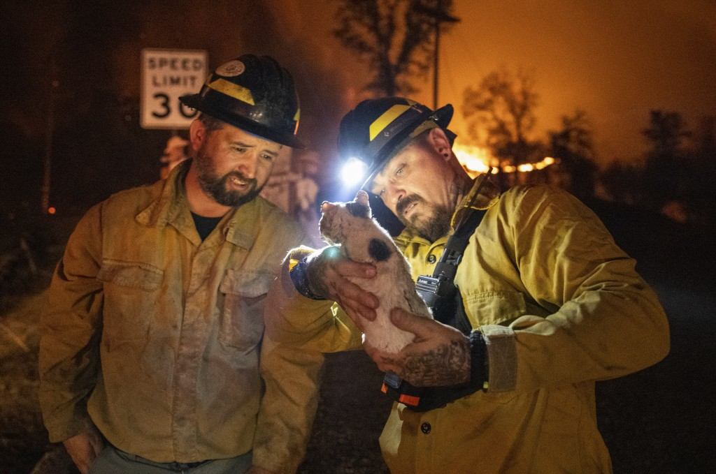 Private firefighter Bradcus Schrandt, right, holds an injured kitten while Joe Catterson assists, at the Zogg Fire near Ono, Calif., on Sunday, Sep. 2...