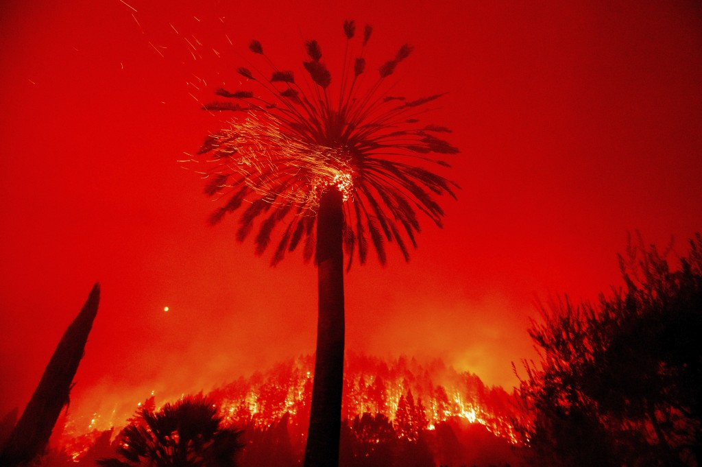 Embers fly from a tree as the Glass Fire burns in St. Helena, Calif., Sunday, Sept. 27, 2020. (AP Photo/Noah Berger)