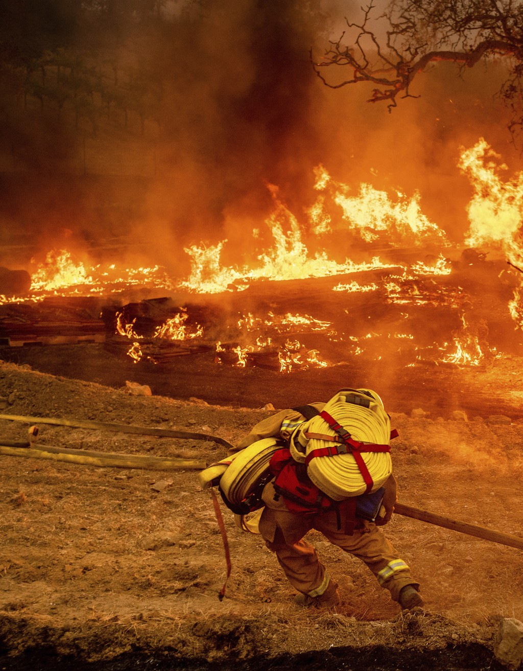 A firefighter carries hose while battling the Glass Fire in a Calistoga, Calif., vineyard Thursday, Oct. 1, 2020. (AP Photo/Noah Berger)