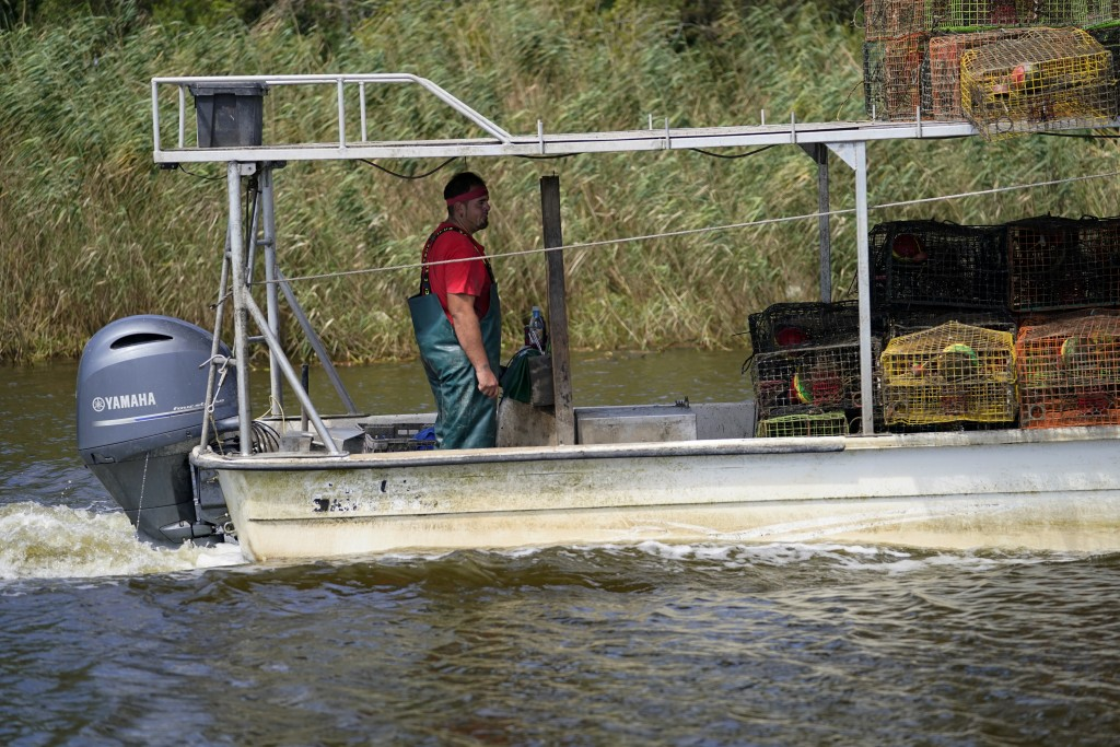 Jule Chaisson motors his boat to the dock after pulling some of his crab traps from Bayou Dularge in anticipation of Hurricane Delta, expected to arri...