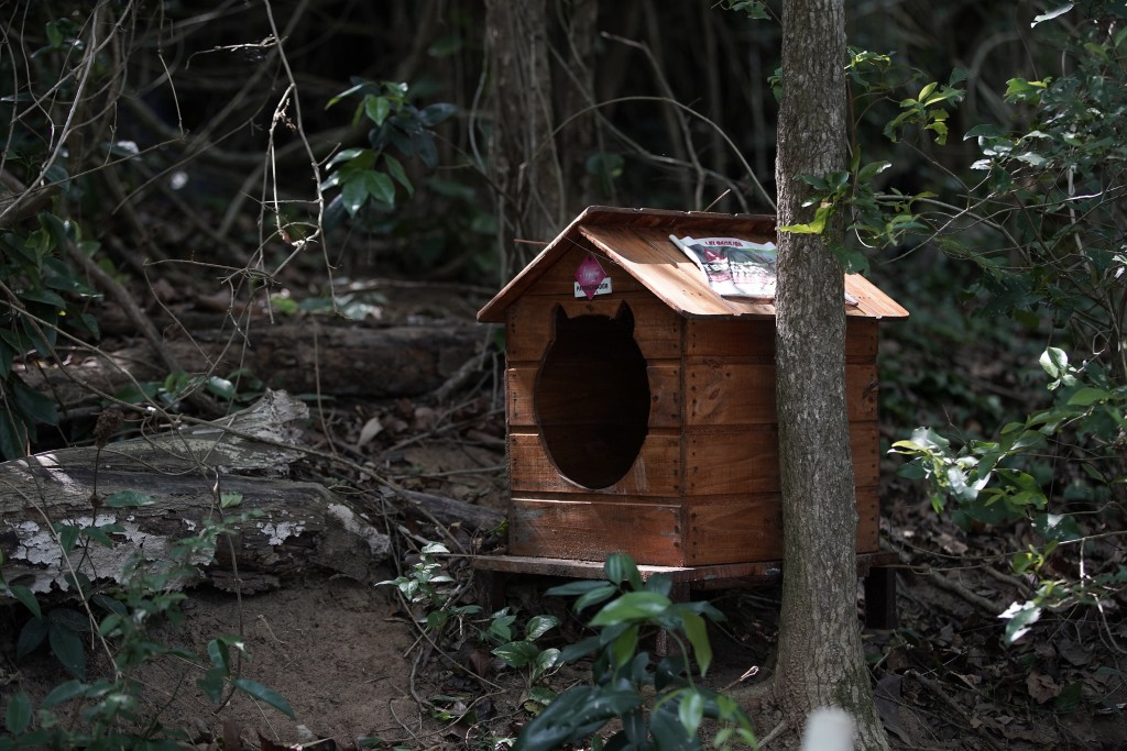 """A cat shelter sits on Furtada Island, popularly known as """"Island of the Cats,"""" in Mangaratiba, Brazil, Tuesday, Oct. 13, 2020. Volunteers are working ..."""