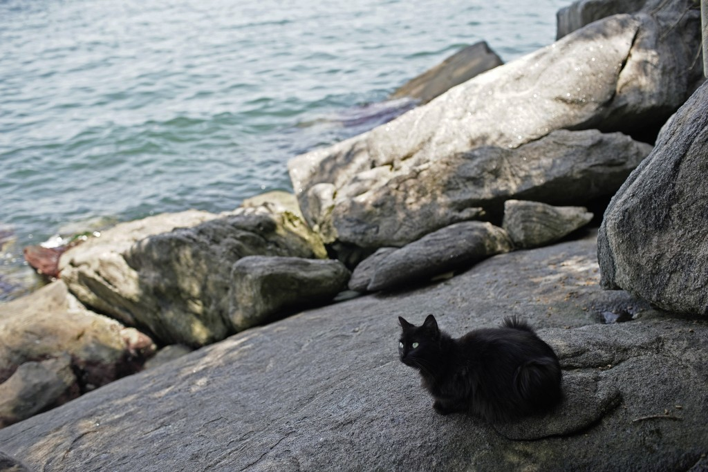 """A cat rests on Furtada Island, popularly known as """"Island of the Cats,"""" in Mangaratiba, Brazil, Tuesday, Oct. 13, 2020. Volunteers are working to ensu..."""