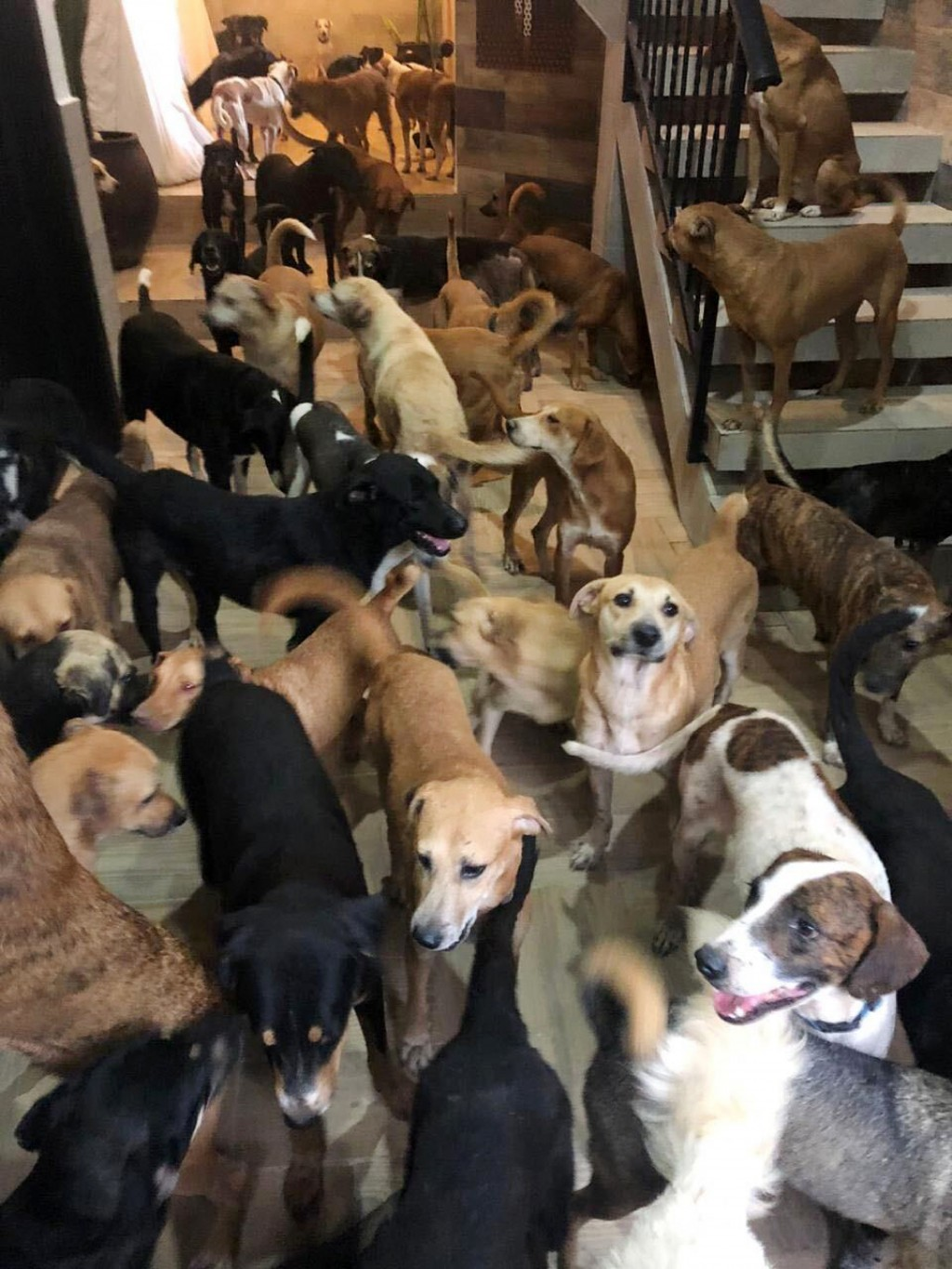 In this Oct. 7, 2020, photo provided by Daniela Rojas, rescue dogs fill the home of Ricardo Pimentel during Hurricane Delta in Leona Vicario, Mexico. ...