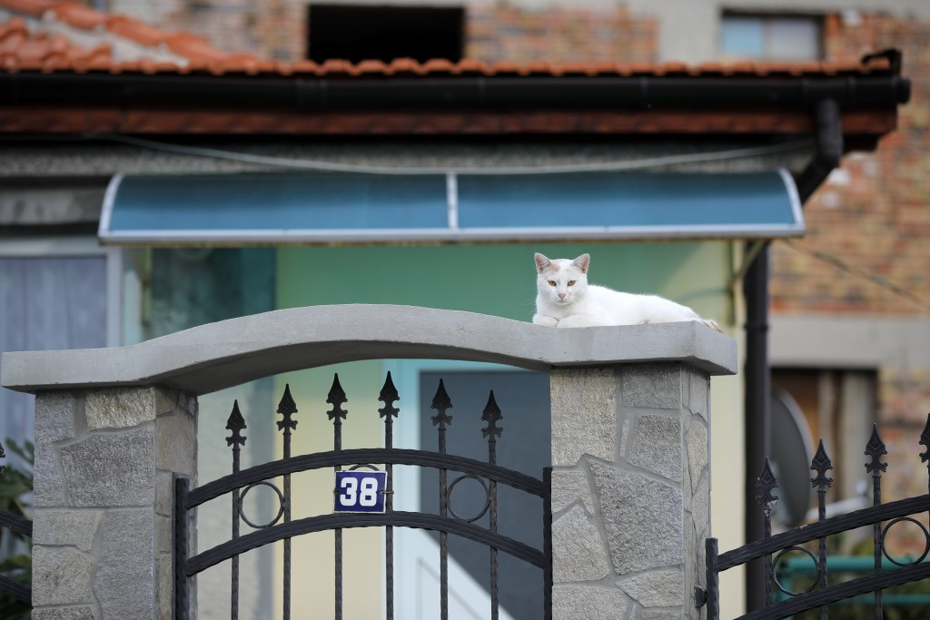 A cat rests on the gate of a house in a village on the outskirts of Burgas, Bulgaria, Monday, Sept. 28, 2020. Human rights activists and experts say l...