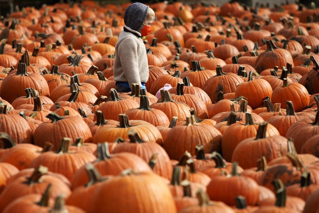 A boy wears a mask as he looks around pumpkins at the Didier Farms in Lincolnshire, Ill., Thursday, Oct. 15, 2020. Pumpkin patch reopens with COVID-19...