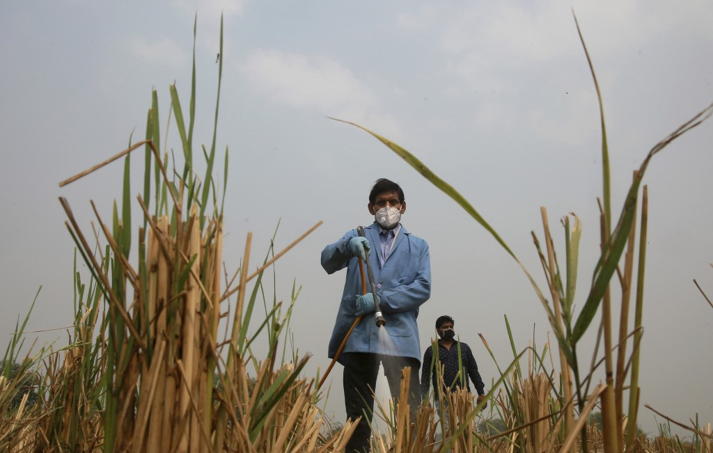 A Pusa Institute of Technology worker sprays bio-decomposer to convert agricultural waste into compost in a field, in a bid to contain farmers from se...