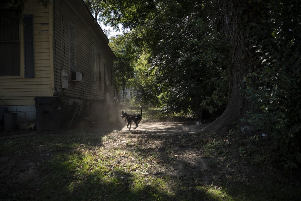 A dog kicks up dirt outside a home in Meridian, Miss., Tuesday, Oct. 6, 2020. (AP Photo/Wong Maye-E)