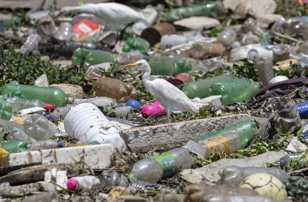 A bird perches on debris looking for food in the Pinheiros River in Sao Paulo, Brazil, Thursday, Oct. 22, 2020. Affected by domestic sewage and solid ...
