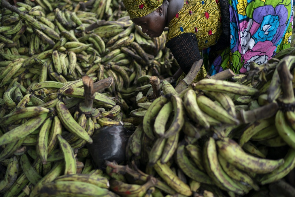A woman separates bananas to sale at a local market in Abobo neighborhood, in the suburbs of Abidjan, Ivory Coast, Sunday, Nov. 1, 2020.  Ivory Coast'...