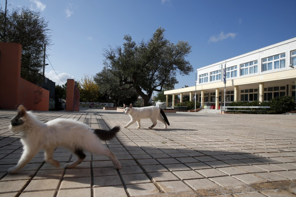 Stray cats walk through the empty yard of a high school, on the first day of remote learning classes in Greece, in Athens, Monday, Nov. 9, 2020. Greec...